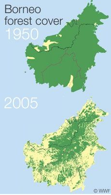 PP- Horrifying! Deforestation in Borneo - 1950 - 2005. (Yeah, well, I'd like to see an equivalent for what we did to the US. We've made environmental problems the fault of poorer countries without examining our behaviour. <3 Annie)