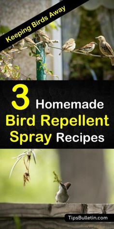 Learn how to make simple homemade bird repellent sprays with non-toxic, environmentally friendly products. These simple pest control methods will keep birds from eating your plants and destroying your garden. Slugs In Garden, Garden Pests, Garden Insects, Garden Bugs, Pigeon Repellent, Chipmunk Repellent, Organic Gardening, Gardening Tips, Keep Birds Away