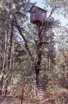 Extraordinarily high treehouse
