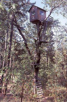 Extraordinarily high treehouse