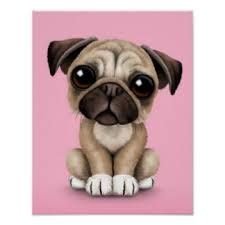 Image result for pug puppy