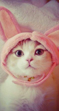 The ever elusive Cabbit – a cat / rabbit hybrid. https://en.wikipedia.org/wiki/Cabbit