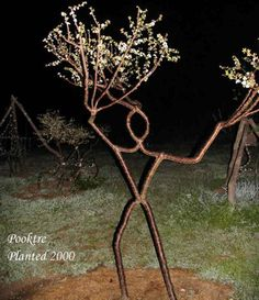 These laughably fake-looking tree men are in fact made using a technique called tree shaping. The trees are bound and grafted as they grow, forming them into man shapes.