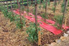 The 2015 Garden Experiments – What Worked, And What Didn't!