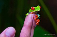 tiny frog