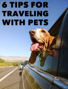 Thinking of planning a trip with your pet? Be sure to check out these tips for safe travel from our veterinary experts!
