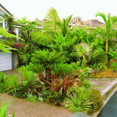 Southern California style: Suburban jungle So much green Southern California Style, California Dates, California Palm Trees, California Garden, Tropical Pool Landscaping, Landscaping With Rocks, Modern Landscaping, Backyard Landscaping, Landscaping Ideas