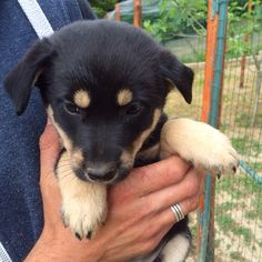I've decided on an abandoned dog and chose this 50 day old baby girl. We've named her Chloe! #inlovealready