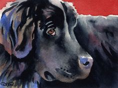 Newfoundland by D J Rogers Dog Paintings, Watercolor Paintings, Watercolor Paper, Puppy Quotes, Chihuahua Art, Australian Shepherd Dogs, Dog Insurance, Rottweiler Puppies, Dog Portraits