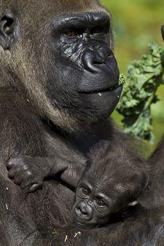 Baby Monroe with his mother, KoKamo.