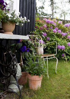 En græsplæne fyldt med ukrudt blev på ni år forvandlet til en cottagehave med…