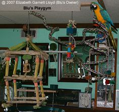 bird toys made of branches | Fun and Entertaining Playgrounds for Birds / Parrots