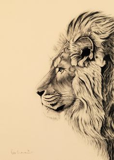Lion tattoos hold different meanings. Lions are known to be proud and courageous. - Lion tattoos hold different meanings. Lions are known to be proud and courageous creatures. Kunst Tattoos, Leo Tattoos, Body Art Tattoos, Mini Tattoos, Tattoo Art, Tattoo Fonts, Small Tattoos, Lion Drawing, Drawing Sketches