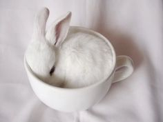 Bunny in a coffee cup; so sweet