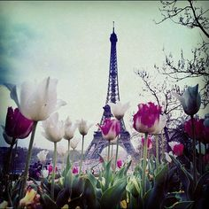 tulip flower hd images AT EIFFEL TOWER - Google Search