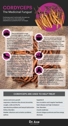 "Cordyceps, aka ""medical mushrooms,"" provide plenty of health benefits. Cordyceps uses include treating cancer, anti-aging, increasing energy… Anti Aging Tips, Anti Aging Skin Care, Onigirazu, Salud Natural, Coconut Health Benefits, Nutrition, Healthy Aging, Healthy Foods, Natural Healing"