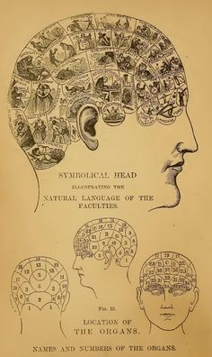 phrenology - a pseudoscience primarily focused on measurements of the human skull, based on the concept that the brain is the organ of the mind, and that certain brain areas have localized, specific functions or modules. The distinguishing feature of phrenology is the idea that the sizes of brain areas were meaningful and could be inferred by examining the skull of an individual.