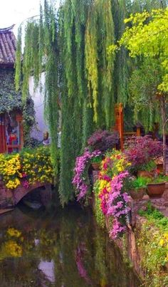 Weeping Willow Bridge in Yunnan