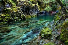 Opal Creek  This is one of the purest streams in Oregon. The brilliant green color lives up to its name.