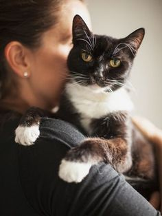 The real reason you're such a cat person