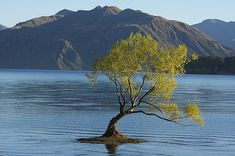 I took this picture fairly early in the morning on the shores of Lake Wanaka.  Lake Wanaka is an alpine lake on the south island of New Zealand.  It is not far from Queenstown.