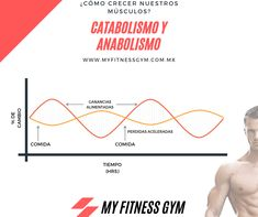 Conoce en que momentos tu cuerpo aprovecha mejor la sistesis proteínica muscular Gym Workouts, Fitness, Chart, Muscle Up, Biblia, Exercises, Sports, Gymnastics, Work Outs