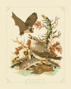 'Hibernal Solstice' by Teagan White
