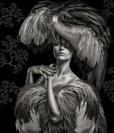 Beaute Aviaire Grey Crane Vii