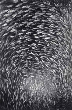 Fish shoal. Great pictures (10 photos)