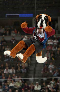 cute ole bernie -- Colorado Avalanche mascot.