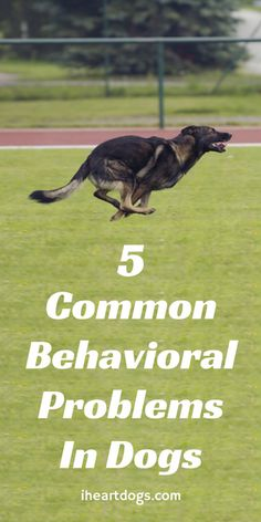 5 Common Behavioral Problems In Dogs