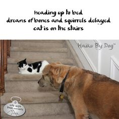 Haiku by Dog: heading up to bed / dreams of bones and squirrels delayed / cat is on the stairs
