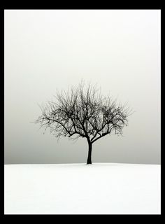 The Tree - so simple but not be explained, nor can it be contained in words ...  a very foggy cold day.