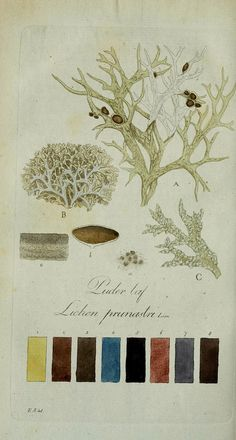 Lichen color charts from the Svensk Lafvarnas Farghistoriaby Johan Peter Westring. Printed in 1805-09.