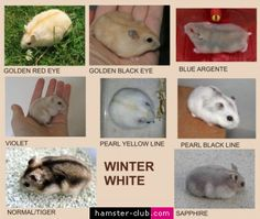 Russian winter white colors.