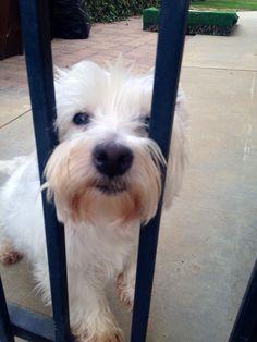Meet Bella  ✋ #puppy