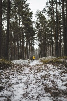 4 Astonishing Yellow Models Person In Yellow Jacket Running On Forest Landscape Photography, Nature Photography, Cool Photos, Beautiful Pictures, Forest Cottage, Winter Running, Saint Jean, Parcs, Cool Landscapes