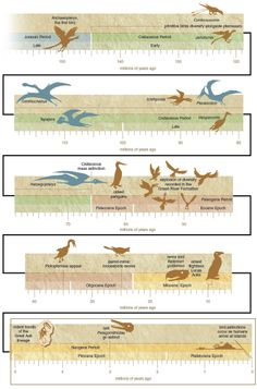 From mousebirds to terror birds, the class Aves has encompassed a remarkable diversity of species over the past 150 million years.  Read more: http://www.americanscientist.org/issues/pub/2014/1/flights-of-fancy-in-avian-evolution  #dinosaurs #birds #fossils #evolution
