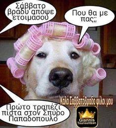 Funny Dog Captions, Animal Captions, Funny Animals With Captions, Dog Quotes Funny, Memes Funny Faces, Super Funny Quotes, Funny Pictures With Captions, Funny Animal Memes, Funny Animal Pictures