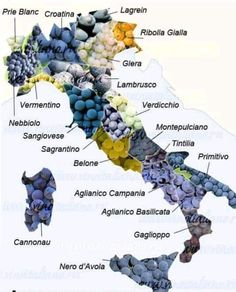 Wine Facts, History Of Wine, Wine Varietals, Wine News, Wine Education, Wine Collection, Wine Bottle Labels, In Vino Veritas, Gourmet