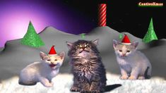 'Silent Night' by the world famous Jingle Cats. Xmas Music, Christmas Music, Christmas Cats, Christmas Time, Christmas Videos, Holiday, White Christmas, Merry Christmas, Cute Kitten Gif