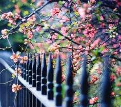 sakurako22 - storybook-magic:Let there be Spring! (by Aileenie)