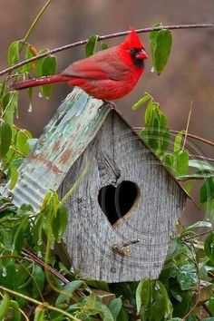 Two of my father's favorites outside, Red birds and bird houses. Two of my father's favorites outsid Pretty Birds, Love Birds, Beautiful Birds, Animals Beautiful, Cute Animals, Birds Pics, Farm Animals, Funny Animals, Cardinal Birds