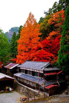 The Autumn Arrival ,Aichi, Japan| Flickr