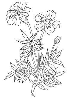 Marigold 3 coloring page - Free Printable Coloring Pages Marigold Flower, Sunflower Flower, Cherry Blossom Flowers, Iris Flowers, Colorful Flowers, Marsh Marigold, Flower Coloring Pages, Cartoon Coloring Pages, Animal Coloring Pages