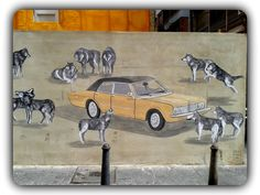 Lobos urbanos