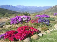 One month away from my South Africa trip! This is one of the places I'll be staying! Mountain Resort, Places Ive Been, South Africa, Nature, Plants, Southern, Naturaleza, Plant, Nature Illustration