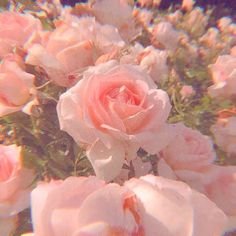 Image uploaded by ➭ 𝐭𝐡𝐞𝐦𝐞𝐬 🌷🔭🚿. Find images and videos about pink, aesthetic and nature on We Heart It - the app to get lost in what you love. aesthetic room GIVE CREDIT IF USING. 🌸 on We Heart It Peach Aesthetic, Nature Aesthetic, Aesthetic Images, Aesthetic Collage, Flower Aesthetic, Baby Pink Aesthetic, Aesthetic Vintage, Pink Tumblr Aesthetic, Aesthetic Women