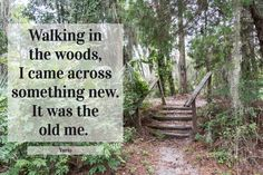 Walking in the woods, I came across something new. #walkingquote