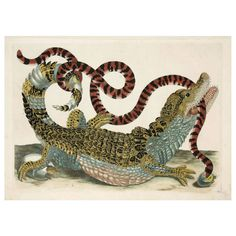 Caiman and Snake, 1719 | From a unique collection of antique and modern prints at https://www.1stdibs.com/furniture/wall-decorations/prints/